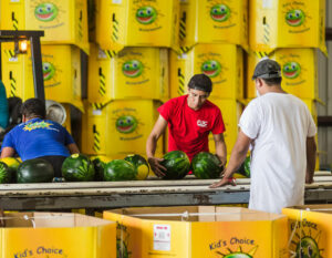 Kids Choice Watermelons Gallery watermelon processing