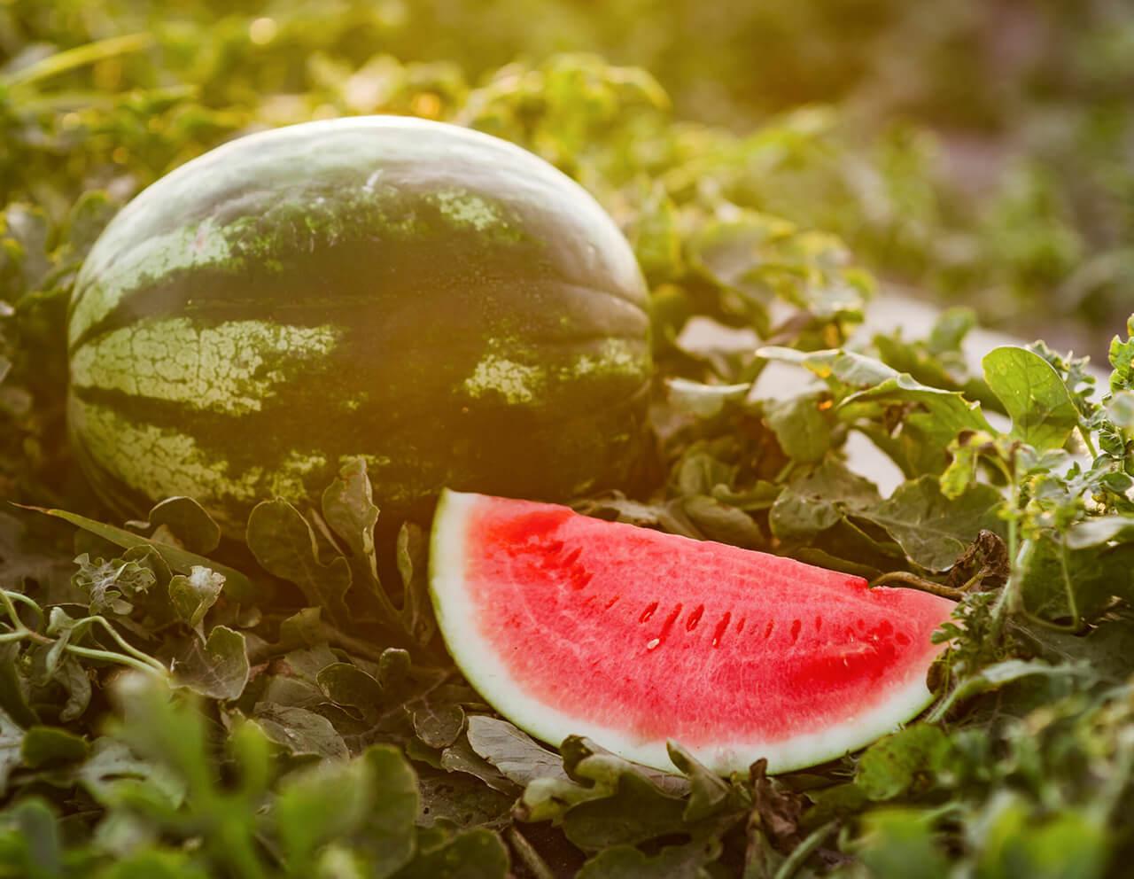 Kids Choice Watermelons Gallery fresh cut watermelon