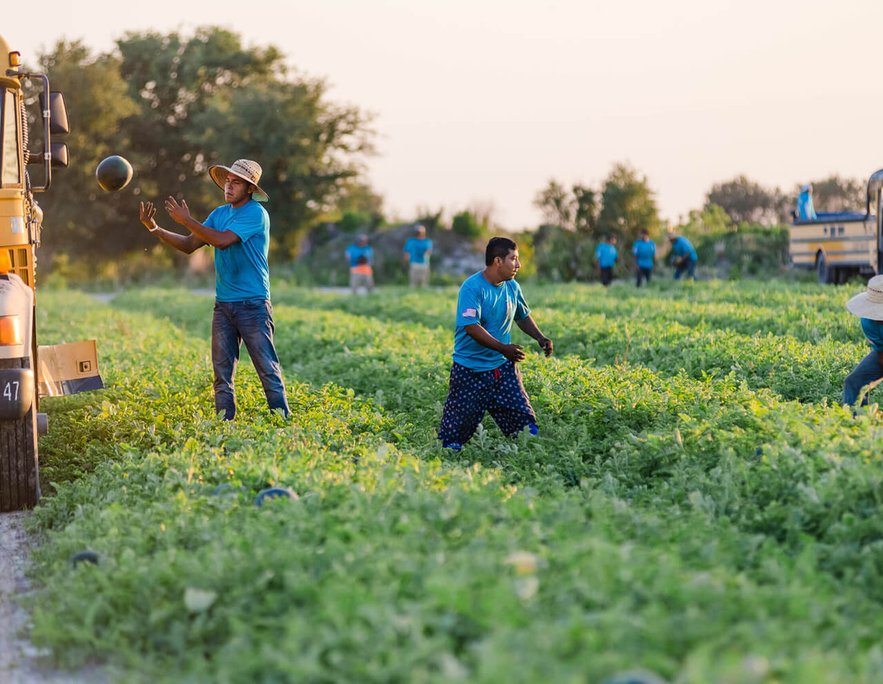 Kids Choice Watermelons Gallery workers in the field