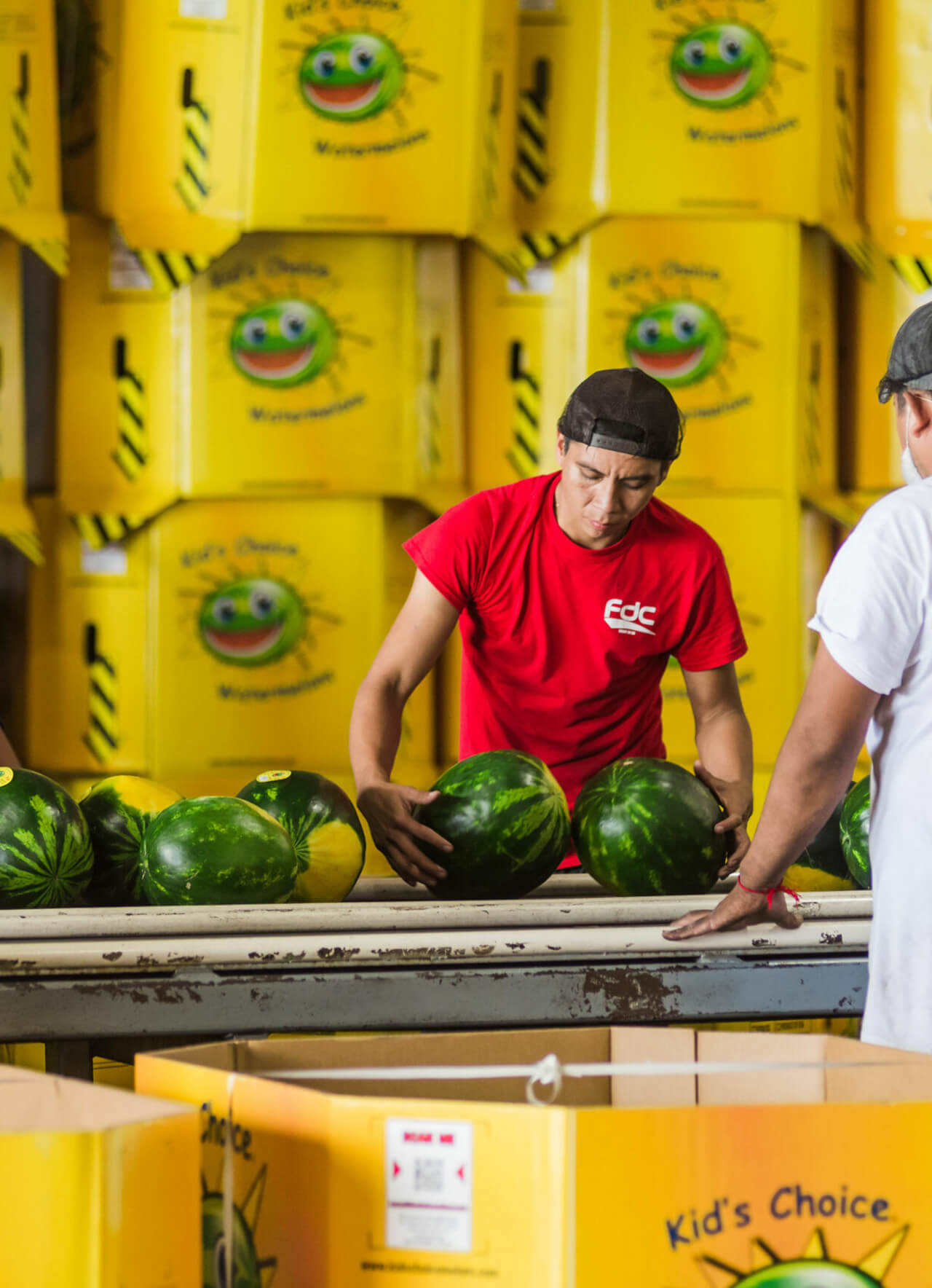 Packing Kids Choice Watermelons
